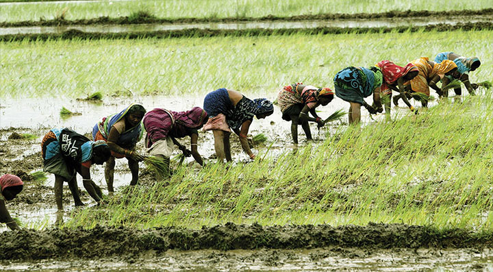 womens in field
