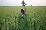 Amidst protests by Punjab farmers, farmers from other states come out in support of farm laws